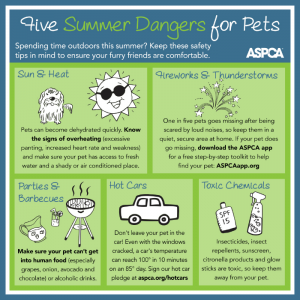 ASPCA-Summer-Danger